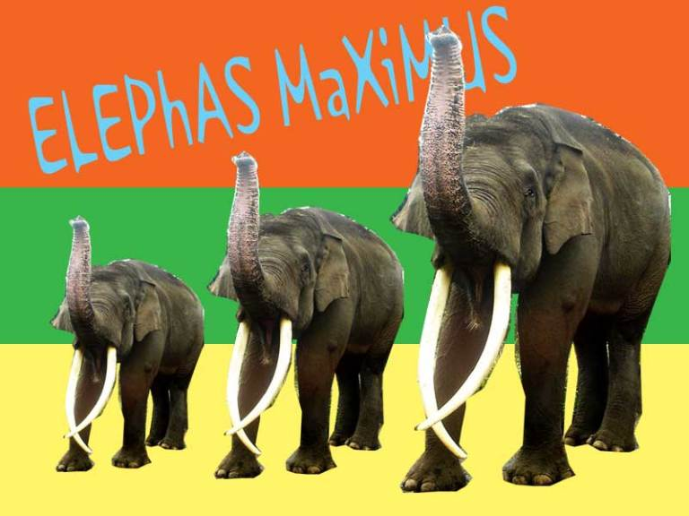 elephas.jpg
